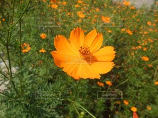 草の中の黄色い花 - No.990475