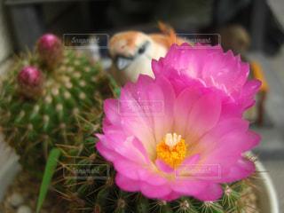 近くの花のアップ - No.990482
