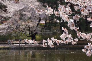 近くの花のアップ - No.990506