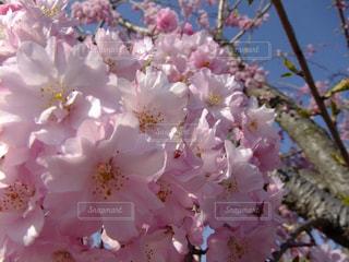 近くの花のアップ - No.990509