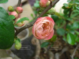 近くの花のアップの写真・画像素材[990514]