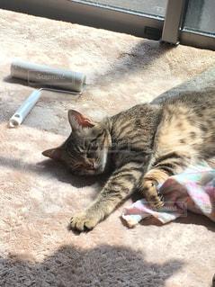 地面に横になっている猫 - No.1104037