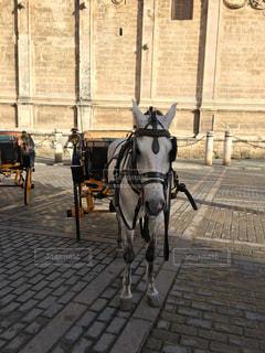 れんが造りの建物の前に馬馬車の写真・画像素材[1158590]