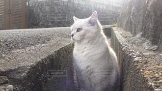棚の上に座って猫の写真・画像素材[1174212]