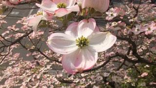 テーブルの上の花の花瓶の写真・画像素材[1174213]