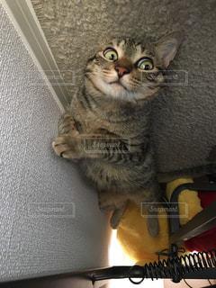 スーツケースの上に座っている猫の写真・画像素材[1362238]