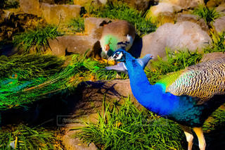 草の中のカラフルな鳥立ちの写真・画像素材[1552811]