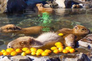 水のクマの写真・画像素材[1552815]