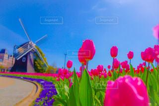 色とりどりの花のグループの写真・画像素材[1552852]