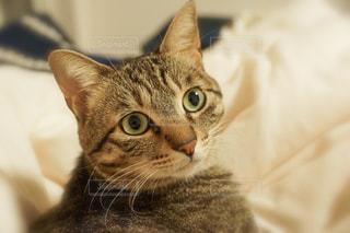 近くにベッドの上で横になっている猫のアップの写真・画像素材[1809367]