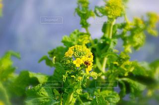 近くの花のアップの写真・画像素材[1809401]