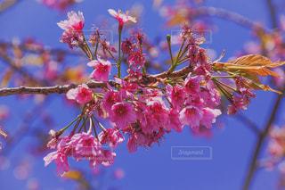 木からぶら下がって花の写真・画像素材[1866016]