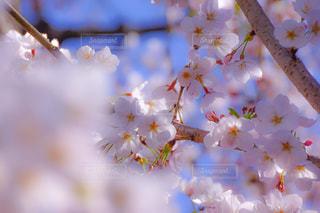近くの花のアップの写真・画像素材[1878857]