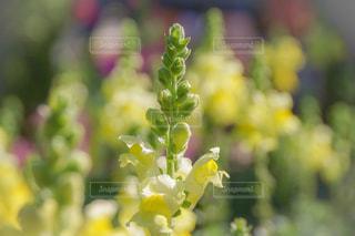 花のクローズアップの写真・画像素材[2090390]