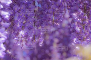 花のクローズアップの写真・画像素材[2090399]