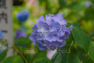 花のクローズアップの写真・画像素材[2216333]