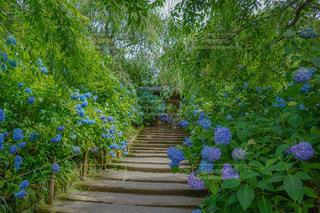花園のクローズアップの写真・画像素材[2216336]