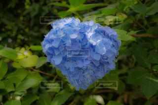 花のクローズアップの写真・画像素材[2216341]