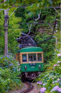 森の近くで列車を走行する列車の写真・画像素材[2216358]