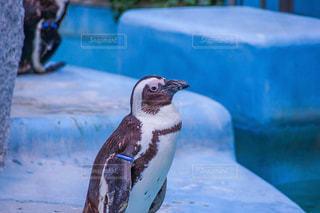 水のプールで泳ぐペンギンの写真・画像素材[2258056]