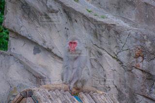 岩の上に座っている猿の写真・画像素材[2258058]