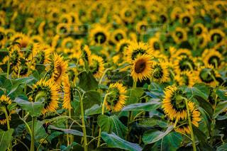 花のクローズアップの写真・画像素材[2320160]
