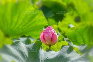 花のクローズアップの写真・画像素材[2372963]