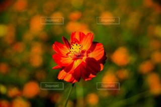 花のクローズアップの写真・画像素材[2514560]