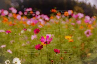 花のクローズアップの写真・画像素材[2514565]