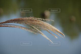 自然の写真・画像素材[2656295]