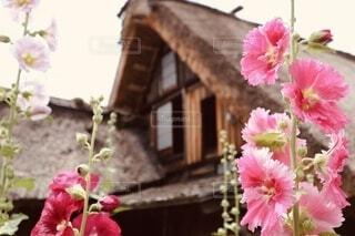合掌造りとキレイなお花の写真・画像素材[4608325]