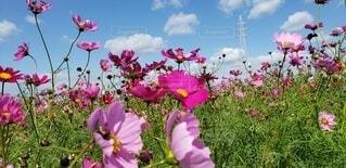 風に揺れるピンクの花の写真・画像素材[3861956]