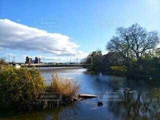 空と池と樹木の写真・画像素材[3931917]