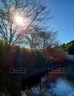池に映る空と紅葉の写真・画像素材[3948296]