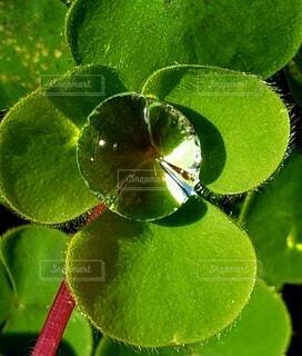 葉っぱの上の水滴クローズアップの写真・画像素材[3948293]