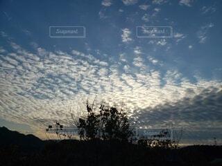 冬の黄昏時の空と木のシルエットの写真・画像素材[4004902]