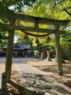 神社の鳥居の写真・画像素材[4327279]