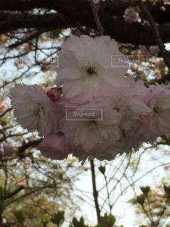 花の写真・画像素材[162081]