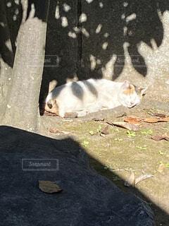 庭園の日が当たる所で昼寝の写真・画像素材[3871716]