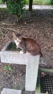 水をねだる猫の写真・画像素材[3866892]