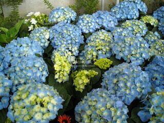 季節花の写真・画像素材[3879372]
