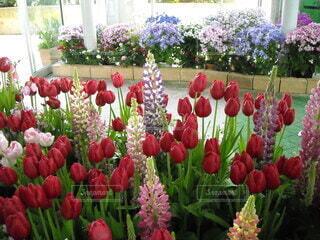 季節花の写真・画像素材[3879369]