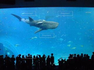 ジンベイサメの写真・画像素材[3879808]