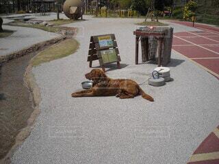 犬の写真・画像素材[3898383]