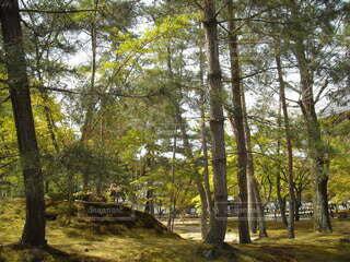 森林の写真・画像素材[3898932]