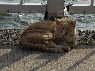 疲れた猫の写真・画像素材[3922331]