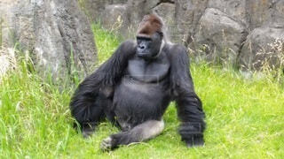 動物園の写真・画像素材[3922338]
