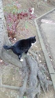 公園の猫の写真・画像素材[3924387]