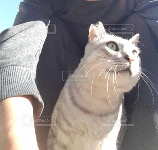 早朝、愛猫と散歩の写真・画像素材[3929987]