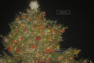 クリスマスツリーの写真・画像素材[3920810]